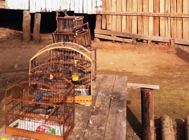Polícia Ambiental apreende arma e pássaros silvestres em zona rural de Ibiraçu-ES 11